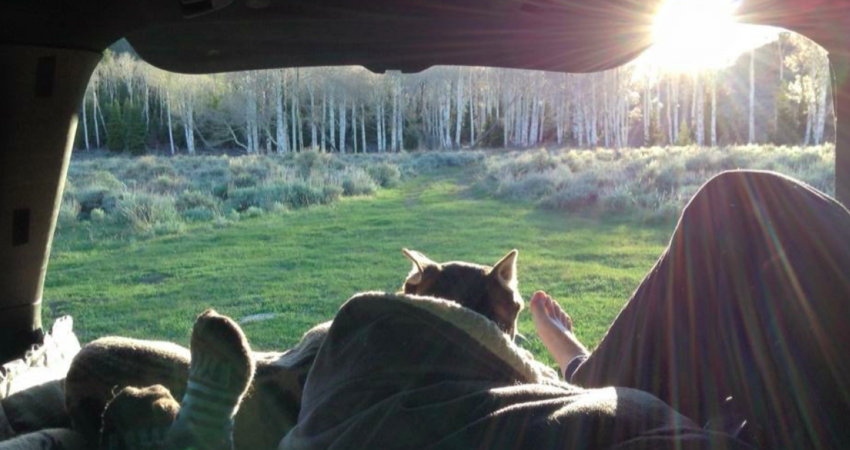 VanLife Sunrise from SUV campervan with dog